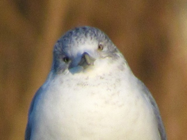 A quizzical seagull expression. Like the squirrel, difficult to interpret.