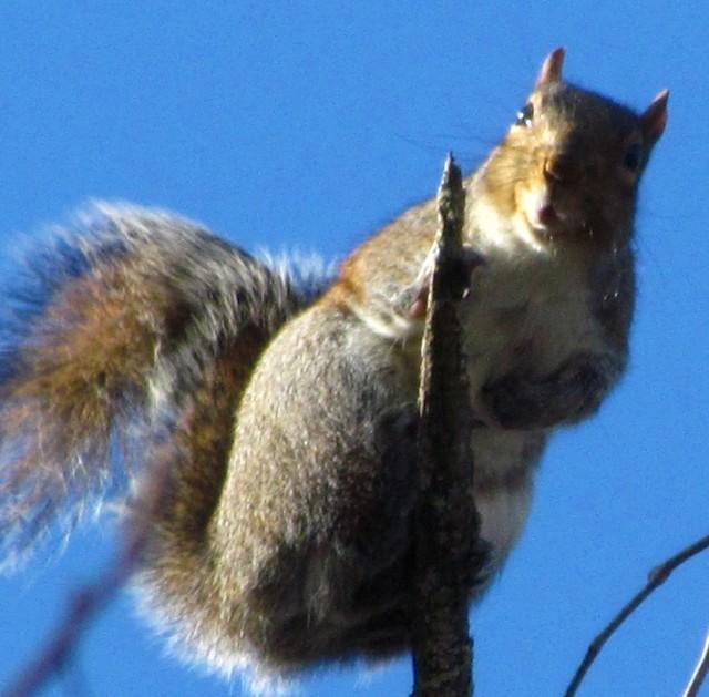 Interpret this squirrel's expression.