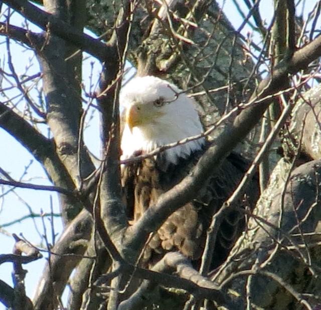Bryan Park, Richmond, VA, March 23, 2015