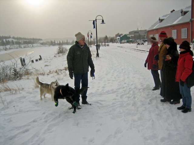 Happy people and dogs on the banks of the Yukon River - Whitehorse, Yukon Territory, Canada