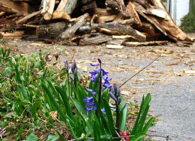 The sight in my driveway at the end of winter/beginning of spring