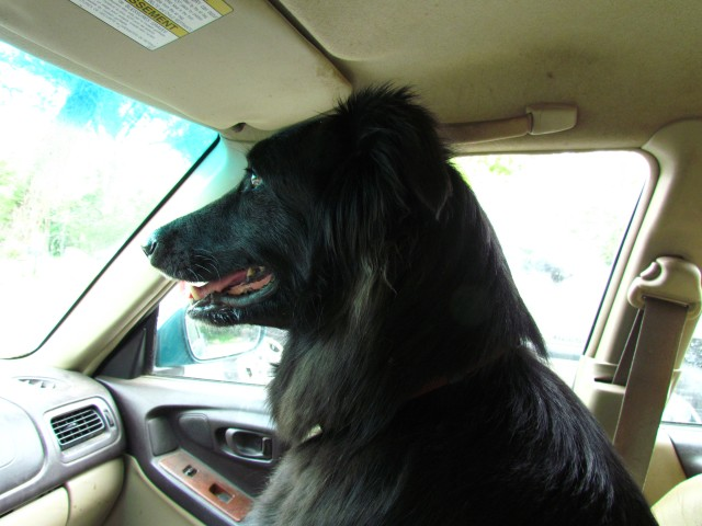 Dog is my copilot #1: Mackey