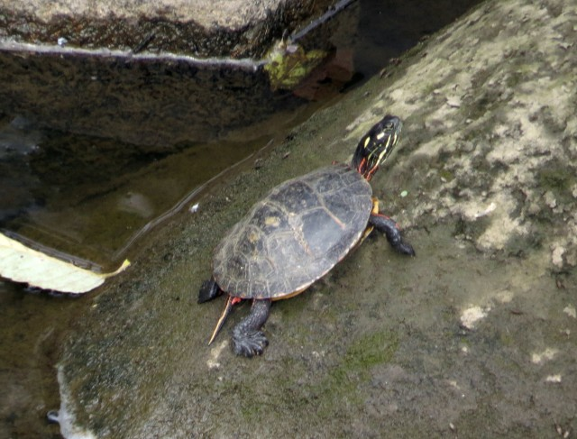 Great turtle image by a budding amateur photographer!