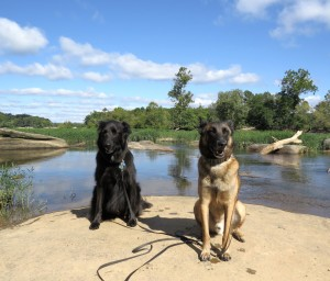 dogs/river/sky