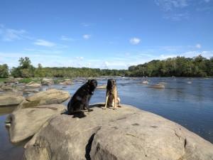 dogs/river/sky (II)