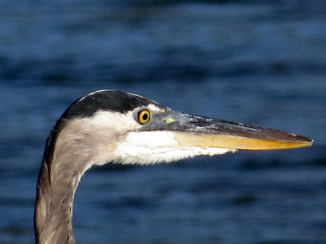 Aren't zoom lenses incredible? Look what you get to see.