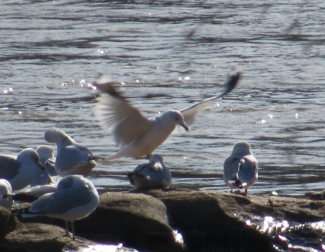 "My sentimentality reveals my age; I was brought up in the ""Jonathan Livingston Seagull"" era."