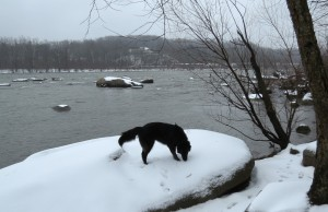 Mackey exploring the snowy river's edge