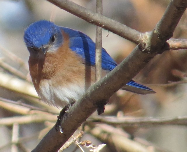 A bluebird in the sun always looks cheerful: