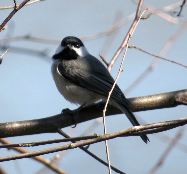Nice looking bird in nice light on a nice day