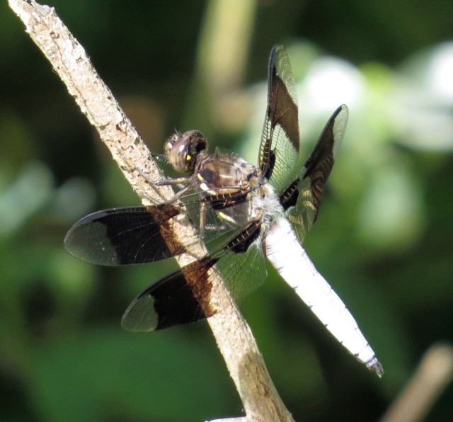 A dragonfly at Bryan Park