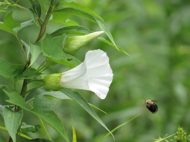 Flying toward a flower