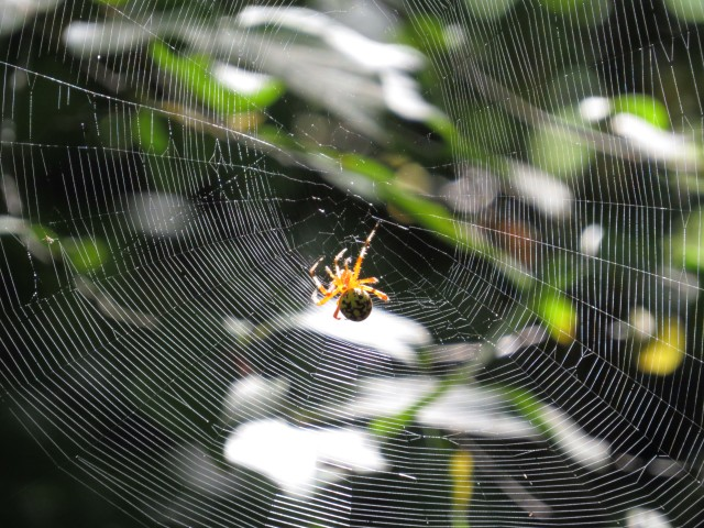 This spider has opened the breakfast buffet and is waiting for guests to arrive.