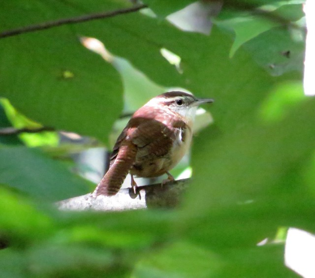 """Glimpse through the trees of a """"nervous, energetic, shy, generalist."""""""