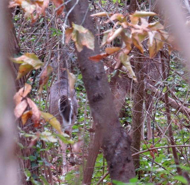Two deer tormenting Mackey and Turner