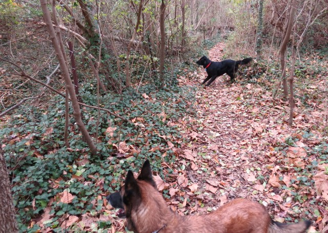 Mackey tells those deer to KEEP MOVING. They ignored him.