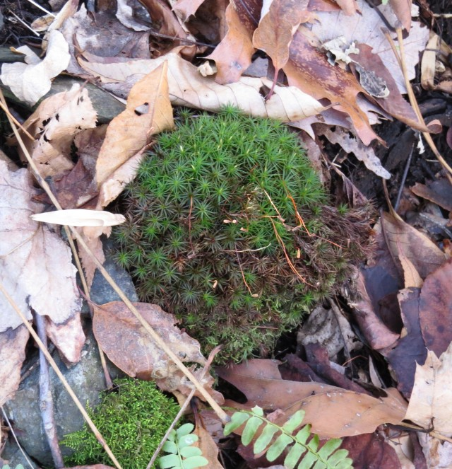 More moss - so much to see
