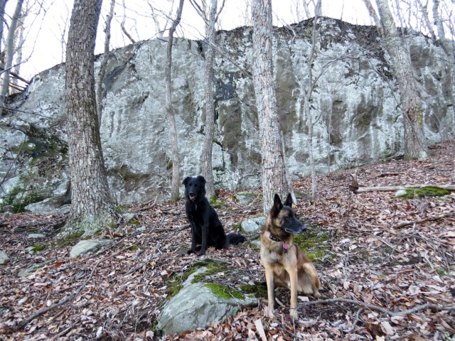 Great dogs, great day, great big piece of granite.