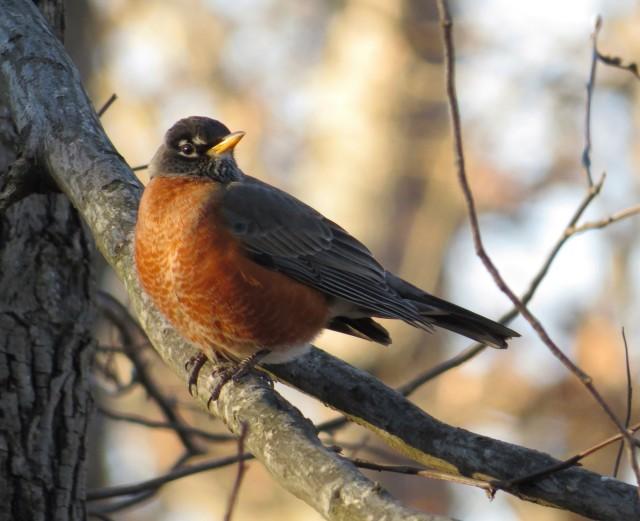 Robin warming up in the sun