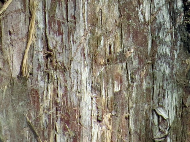 Eastern redcedar bark