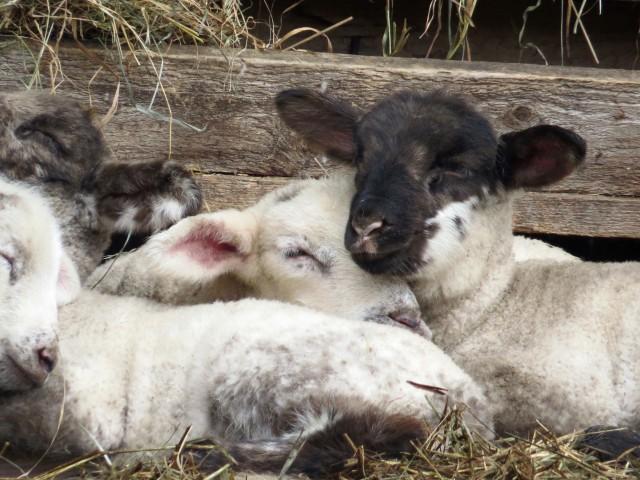Some sleepy babies!