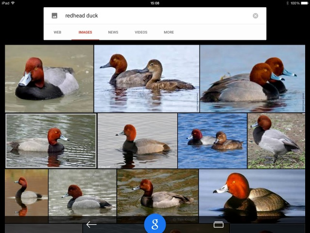 Redheads - by Google - look closely at the beaks.
