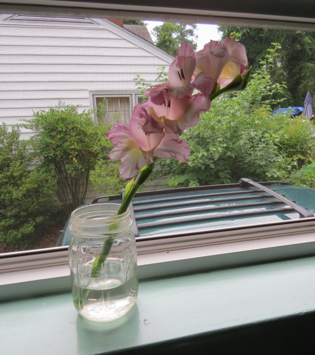 Gladiolas from the backyard to the windowsill in our kitchen: