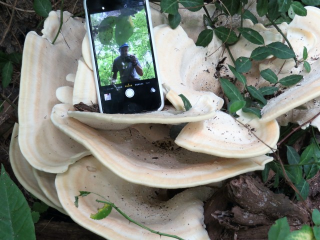 A fungus, an iphone, a mystery guest