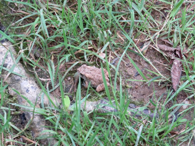This post is infested with unidentified creatures. Including this toad, although thats