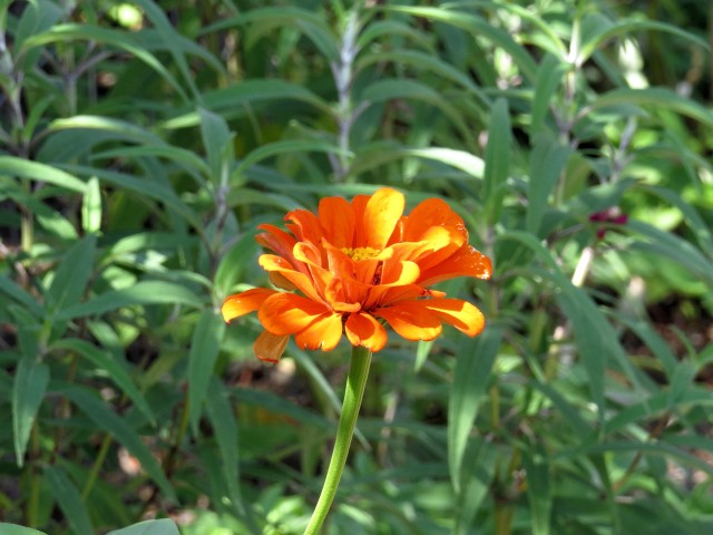 Another lovely orange flower