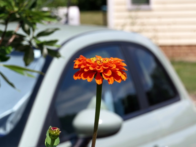 One lovely orange flower