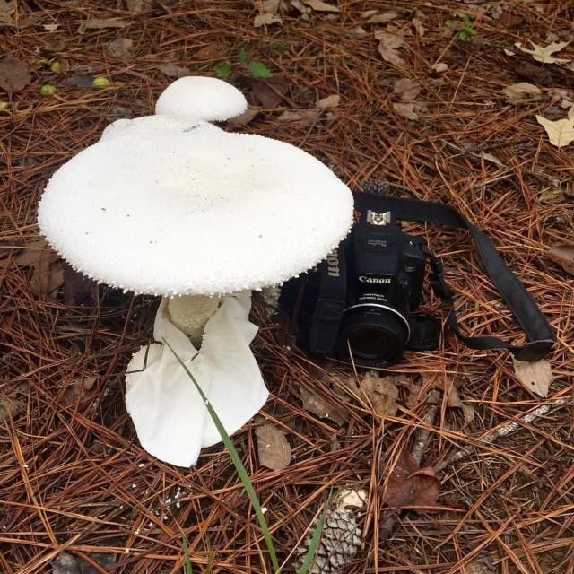 Very fun. That is one big mushroom.