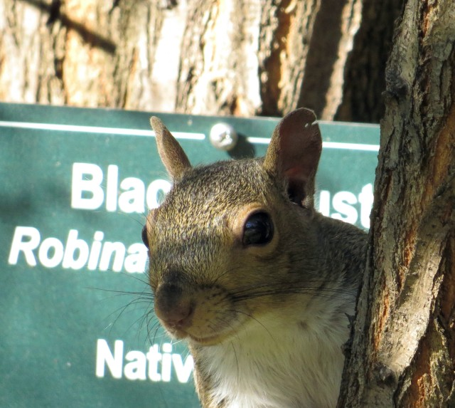 Some squirrels will go to great lengths to get their pictures on the internet
