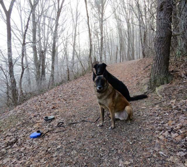 Mackey and Turner enjoying Sunday morning in the woods