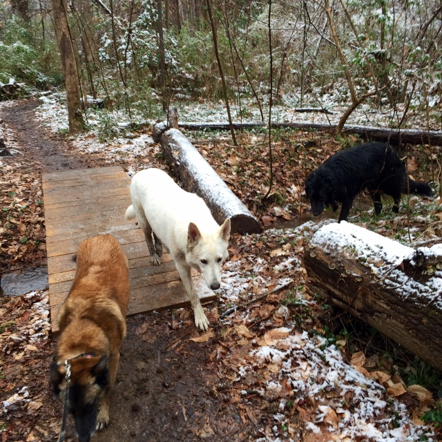 You just could not ask for better hiking companions. See Mackey on the right? Plus Yuki (white) and Turner (brown).