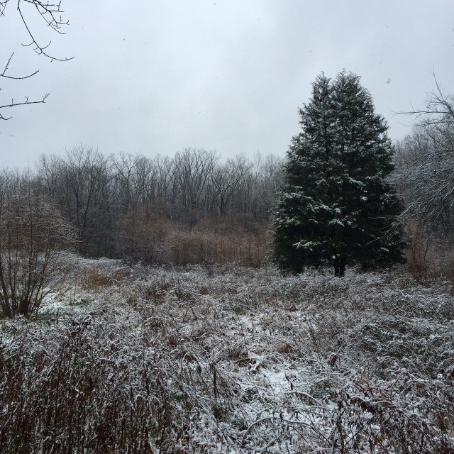 Snowy morning at Pony Pasture