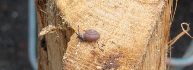 Snail on an oak log
