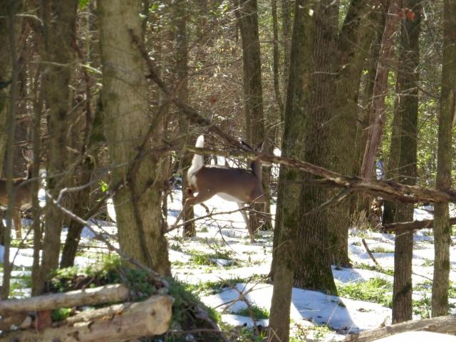 Deer in the center, running. Deer on the left, watching.
