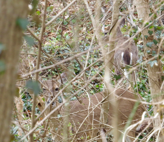Deer, blending in - they're awesome at that.
