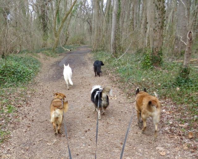 Canine vanguard