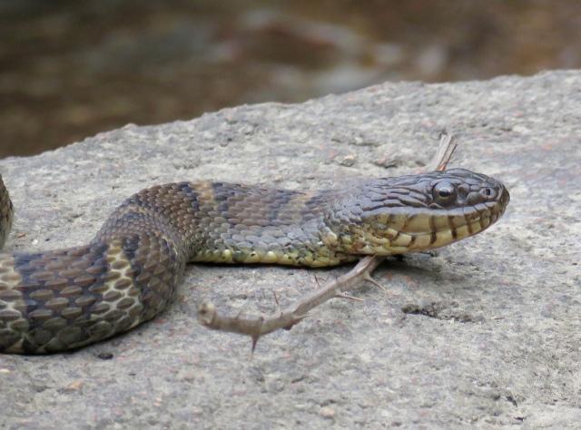 bryan snake03
