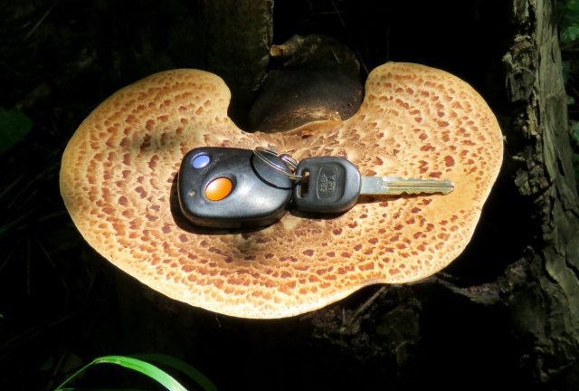 Fungus with keys