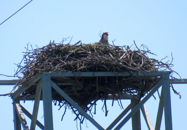 That's the nest - if you drive on Parham Road, you can't miss it.