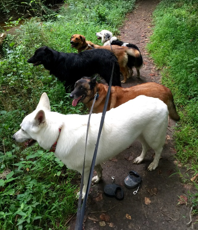 Yuki in front, then Turner, Mackey, Lola and Luna. The first three are males, the other two are females.