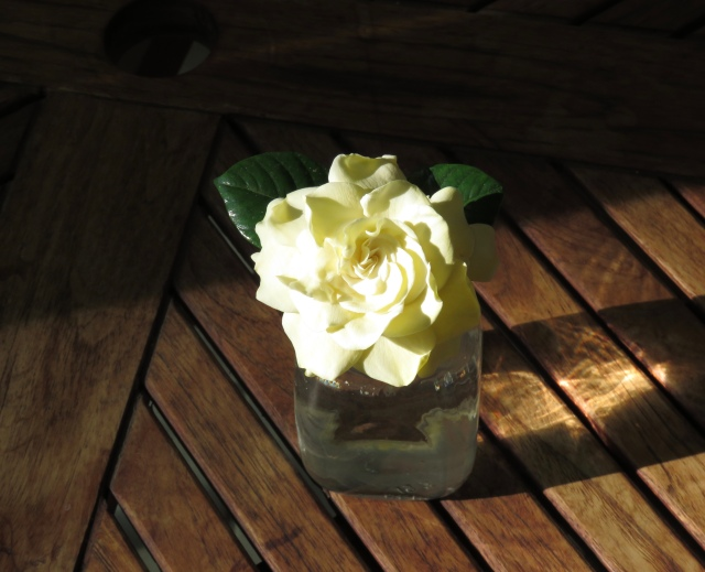 I think every flower secretly wishes it was a gardenia. They are simply without parallel.