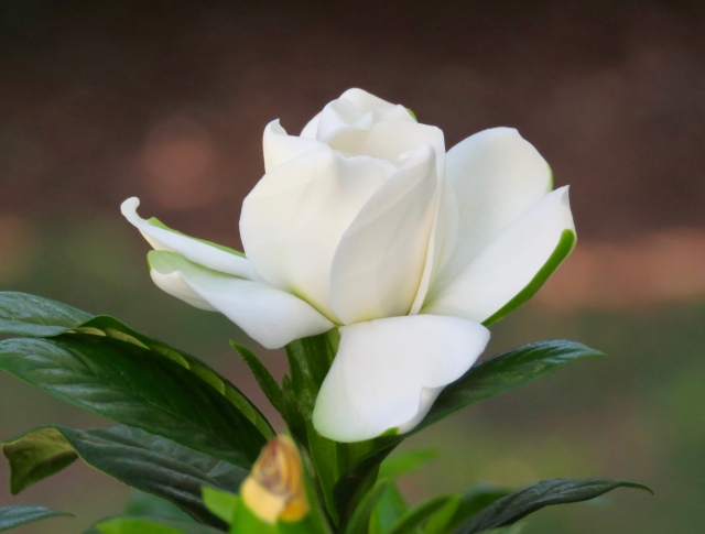 If you're going to pant, it's good to do it with your nose in a gardenia.