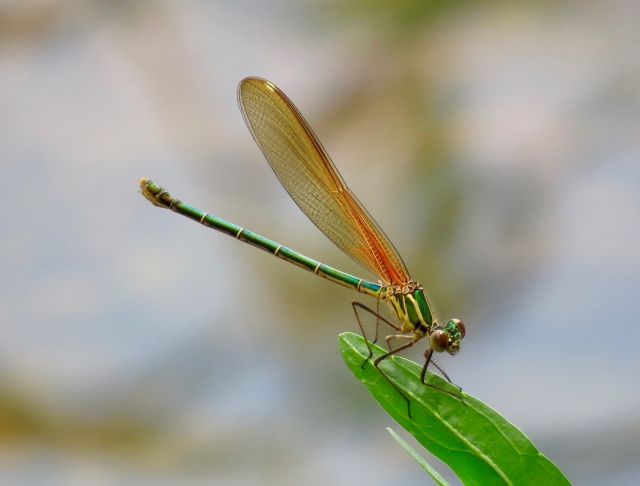 I know not everyone loves insects. But it's difficult to see this as anything other than lovely.