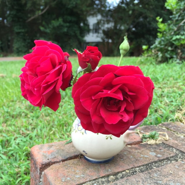 Beautiful roses from our yard