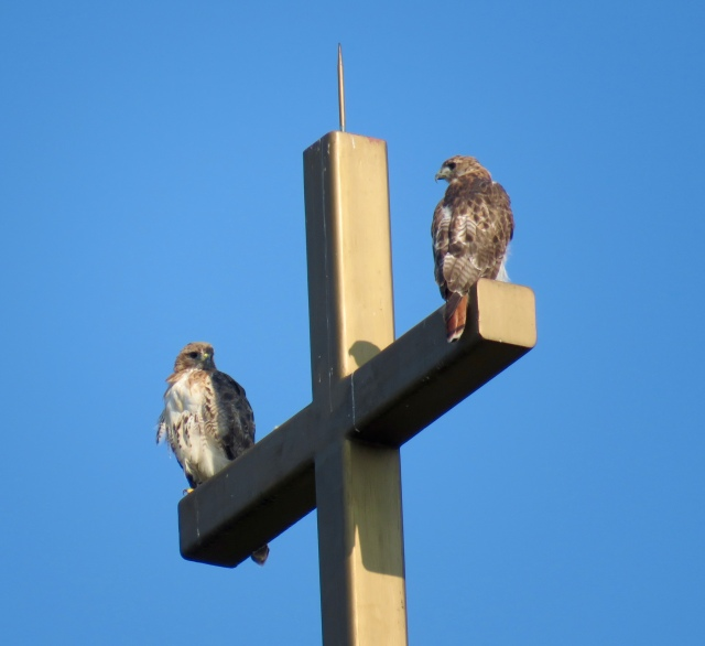 "Ev's response: ""Holy Hawks!"""