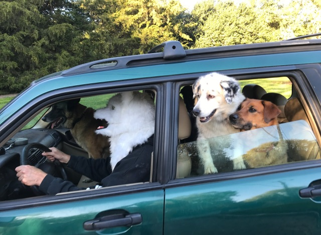 These dogs really know how to enjoy themselves